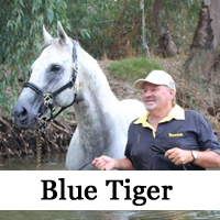 Gallery-BlueTiger-thumb