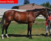 Dorset_Noble_renamed