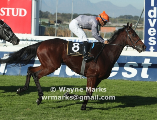 Weekend Race Comments – Durbanville & Greyville