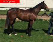 2014querari-x-marry-for-money_renamed