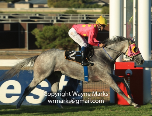 Weekend Racing at Greyville & Kenilworth