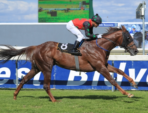 Matchem Stakes Day, Runner Comments