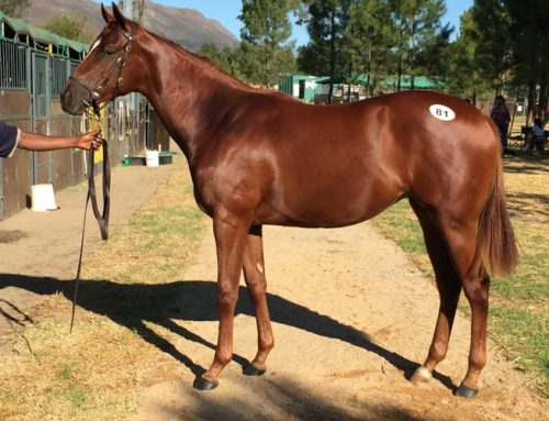 16.7 % available in 2 year old Thomas Crown Filly