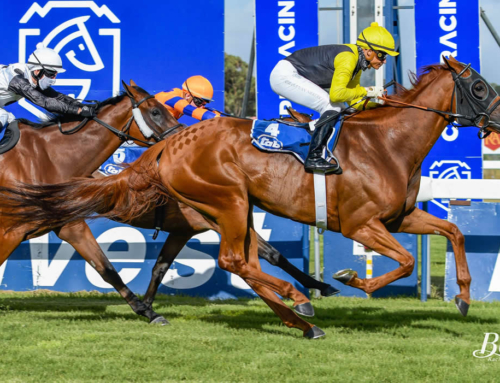 WEEKEND RACE COMMENTS – FAIRVIEW, KENILWORTH & GREYVILLE